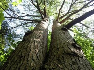 Atlanta Home Tree Removal