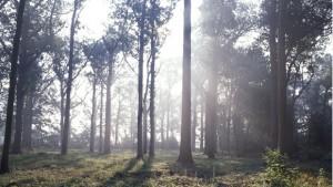 Decatur Tree Care